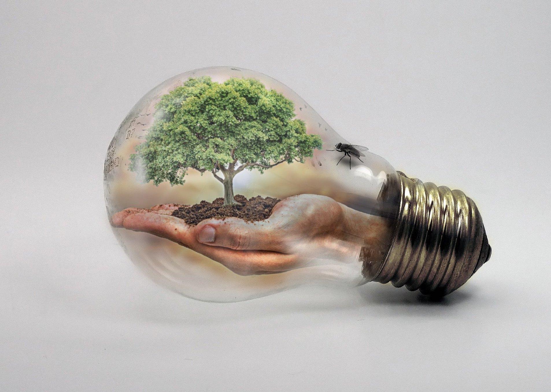 Abstrakt. In einer altmodischen Glühbirne trägt eine geöffnete Hand einen Baum samt Erde.
